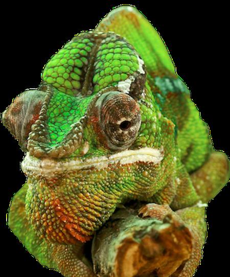 Brick Tinting - Chameleon Brick Services Chameleon