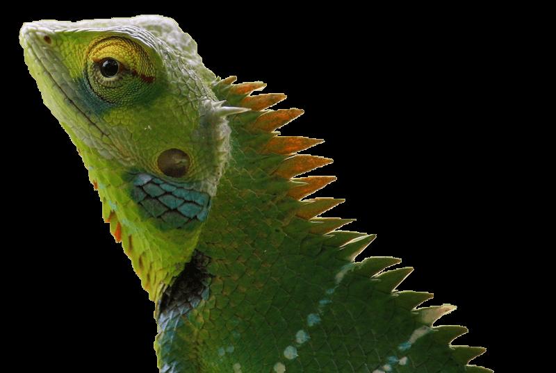 Chameleon Brick Tinting masot